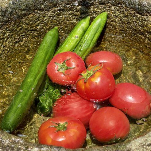 送料込【大阪府河内長野産】kawabata farmの美味~いきゅうり・トマトセット※5月上旬〜6月下旬 約2kg