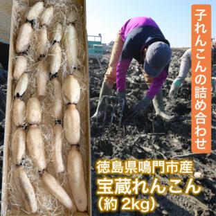 【徳島県鳴門市産】宝蔵れんこん※10月〜3月 約2kg(子れんこん)