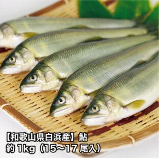 【和歌山県白浜産】鮎 ※9月末まで!約1kg(15〜17尾入)