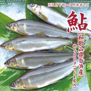 【和歌山県白浜産】鮎 ※9月末まで!約500g(7〜8尾入)